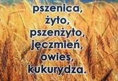 kupię rzepak, pszenice, żyto kukurydze
