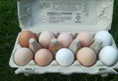 Jaja swojskie