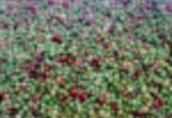 Jagody, owoce lesne slodkie, dojrzale roznych odmian.Produkujemy