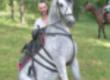 Klacze Ukraina. Konie 900zl, zwierzeta