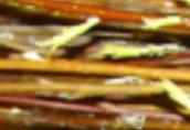 Ukraina.Wierzba 4 zl/m3, wiklina do produkcji celulozy, plyt.Gospodarstwo