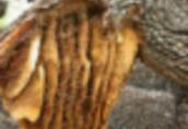 Ukraina.Miod 6 zl/kg.Pozyskujemy ziolomiody, propolis, wosk.Gospodarstwa