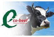 skup bydła rzeźnego byki, jałówki, krowy