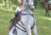 Ukraina.Konie 900zl, zwierzeta hodowlane, ogiery, klacze, siwe rysaki