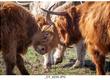 Jałówki Na sprzedaż jałówki oraz krowy