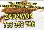 Tyto-ń papiero-sowy 65zł/kg wysyłka 24h marlboro
