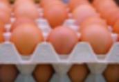 Ukraina.Jaja kurze dietyczne od 1, 7zl opakowanie 10szt. Swieze
