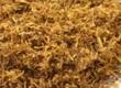 Trawy Sprzedam kolekcjnerom rurzne rodzaje