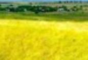 Tania pasza z kukurydzy, owsa 300 zl/tona.Gospodarstwo rolne z