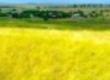 Trawy Tania pasza z kukurydzy, owsa 300