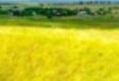 Biznes na Ukrainie.Wprowadzanie na rynek producentow, inwestorow