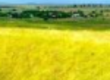 Gospodarstwa rolne Biznes na Ukrainie. Wprowadzanie